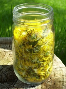 dandylion flowers in a jar
