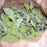 Dried goodsefoot and amaranth leaves in paper bag