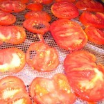sliced tomatoes ready to be dehydrated