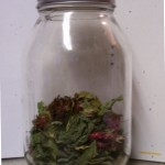 dry herbs for infusion in quart jar