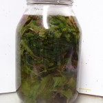 infusion in quart jar