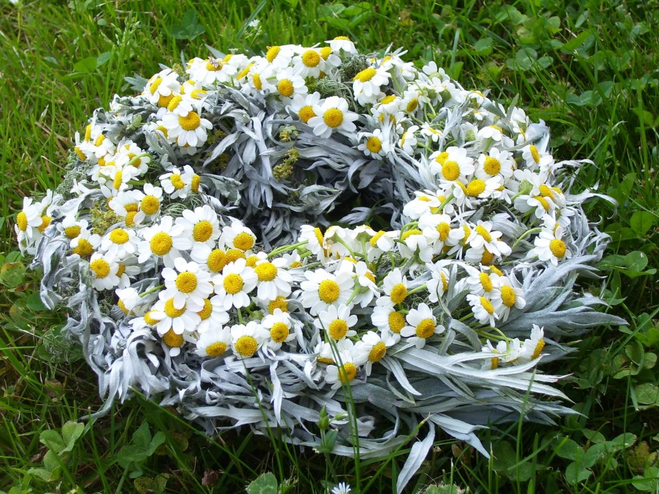 feverfew and artemisia wreath